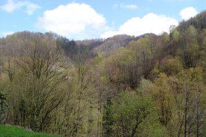 Gozdni rezervat Log ob Sotli